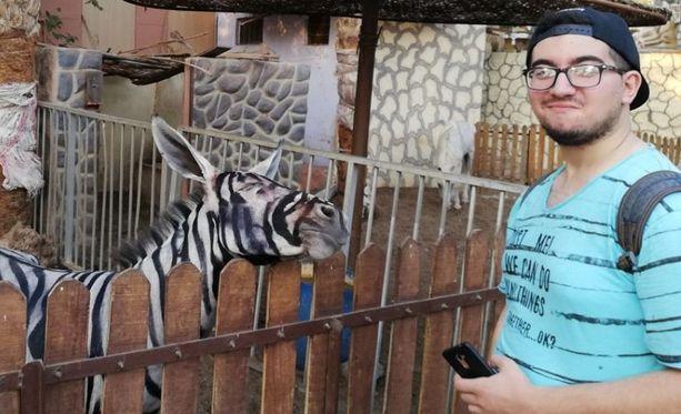 Mahmoud Sarhan alkoi epäillä seepran aitoutta, kun eläimen naamaan maalatut raidat alkoivat valua.