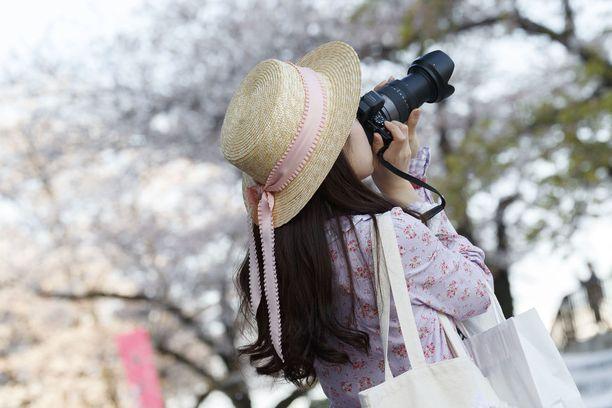 Näitä kukkia ikuistetaan nyt moneen kameraan.