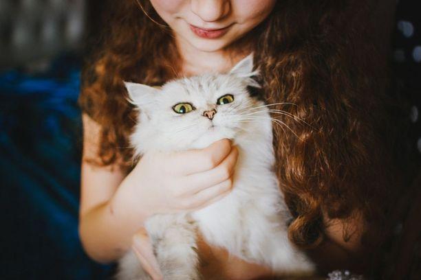 Kissaan voi kesken silityksen iskeä hellyysaggressio. Sitä ennen se on yleensä ilmaissut elein, että nyt alkaa riittää.
