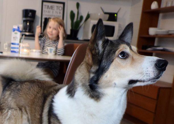 Sankarillinen Pörrö, eli Soidinahon Mossen Aarre, on suojeleva perhekoira, mutta myös erinomainen metsästyskoira. Taustalla perheen lapsista Nella, joka nimesi koiran pentuna Pörröksi.