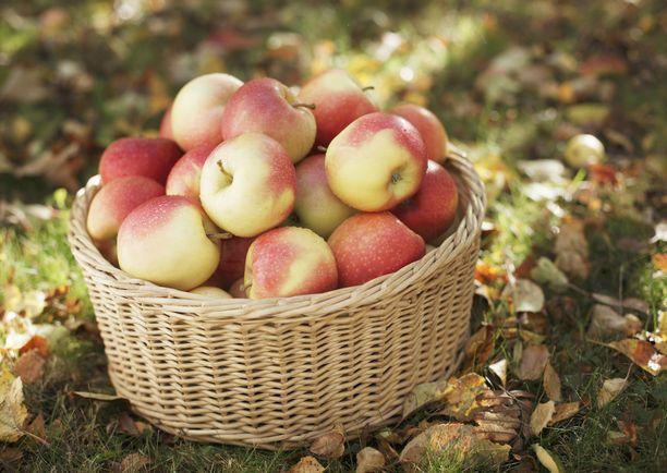 Omenan kuitu auttaa pitämään myös nälän poissa ja verensokerin tasaisena.