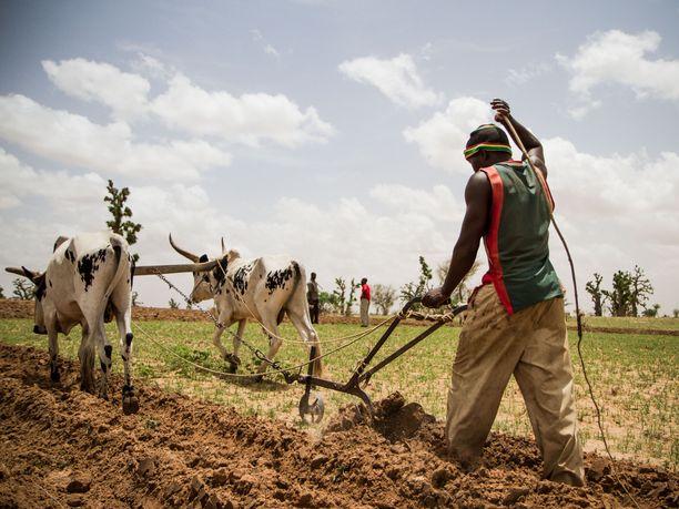 Köyhyydestä, poliittisista ja turvallisuuteen liittyvistä haasteista kärsivä Sahelin alue Afrikassa on EU:lle strateginen prioriteetti. Kuvassa viljelijä Sahelin alueeseen kuuluvassa Diounan kylässä kesällä 2012.