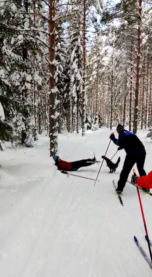 Metso sysäsi aikuisen miehen auttamatta ladun varteen selälleen.