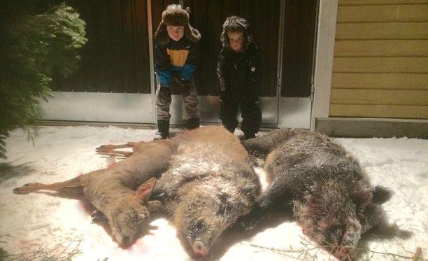 Pohjois-Kymenlaaksossa Kouvolan Kimolan kylässä kaurisjahtina alkanut metsästysiltapäivä muuttui sikajahdiksi viime joulukuussa, kun passiketjuun tuli rauhoittamattomia villisikoja. Pikkupojat ihmettelevät saalista.