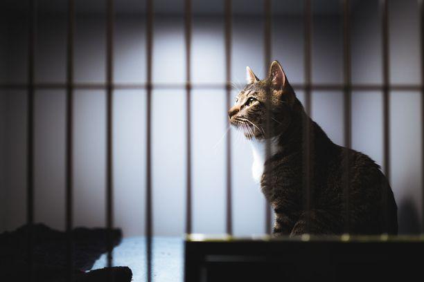 Osa hylätyistä kissoista kuolee nälkään tai kylmyyteen talvipakkasten myötä.