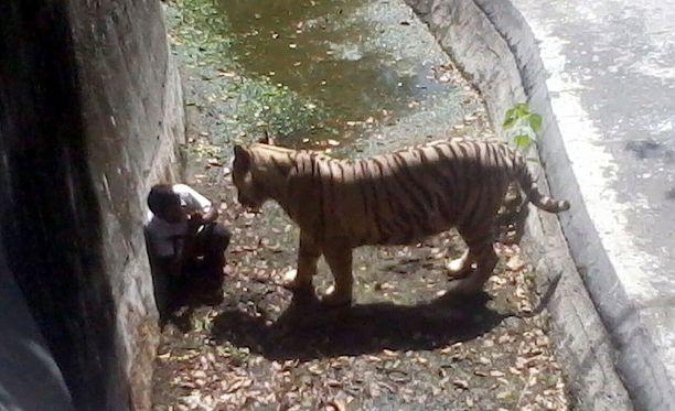 Valkoisen tiikerin aitaukseen päätynyt parikymppinen poika vain hetki ennen kuolemaansa New Delhin eläintarhassa.