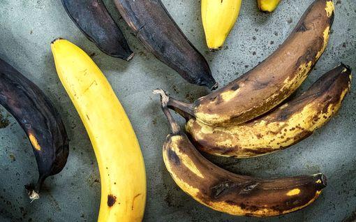 Pienellä kikalla saat banaanista silkkisen smoothien - älä edes yritä huoneenlämpöisellä