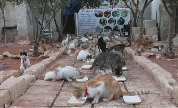 Kissoja on tällä hetkellä noin sata.