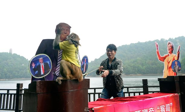 Geda-apina valitsi Donald Trumpin ja antoi sille suukon.