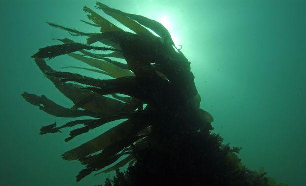 Itämeren tila on tutkimuksen mukaan kohentunut vuosituhanten saatossa.