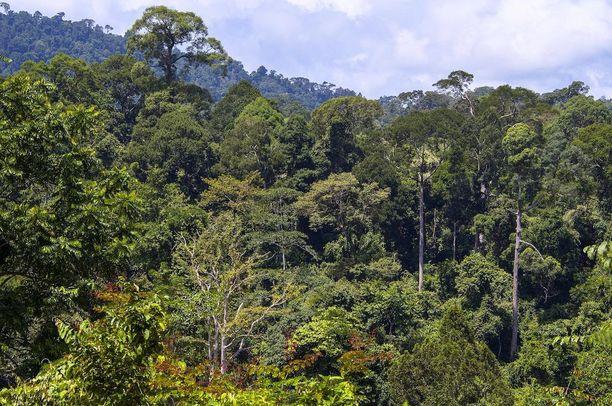 Finnfundin mukaan Dasosin vetämä metsähanke on työllistänyt satoja ihmisiä Malesiassa. Kuvituskuva.