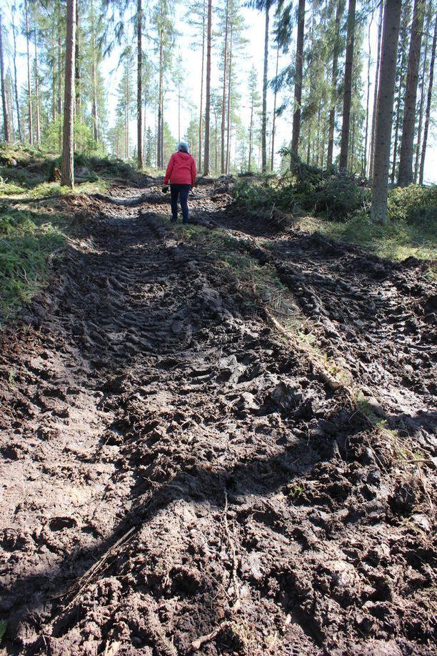 Virkistysalueen polut ovat hautautuneet metsäkoneen jättämien urien alle.