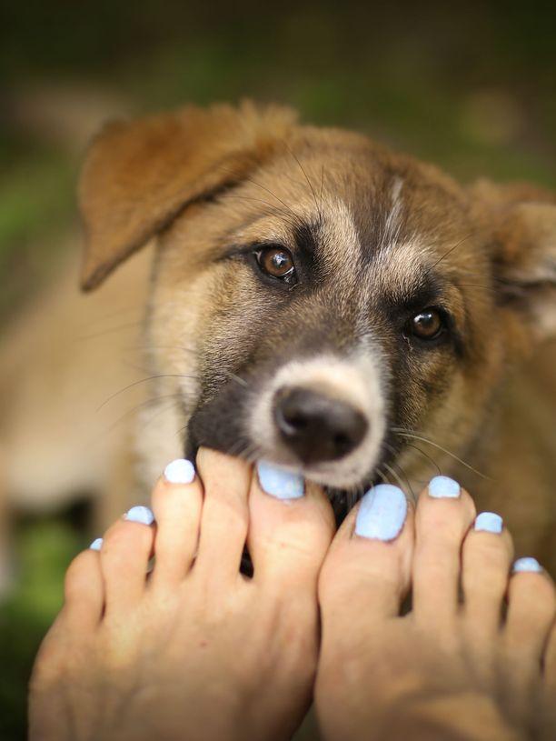 Suloinen tuntematon, vapaana juokseva turistikohteen kissa tai koira voi kantaa hengenvaarallista rabiesvirusta. Sitä ei kannata päästää iholle.