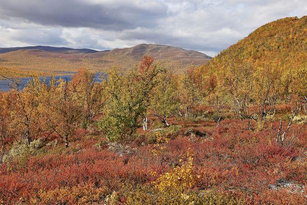 Sunnuntaina on syksyisen viileä sää. Kuvituskuva Kilpisjärven ruskasta.