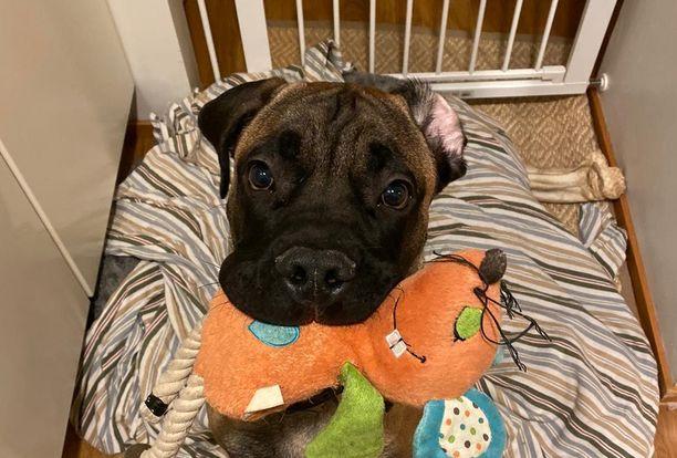 Kahdeksan kuukauden ikäinen Rollo kuoli etyleeniglykolimyrkytykseen. Omistaja Sofian mukaan se on voinut päätyä koiran elimistöön vain koirapuistossa.