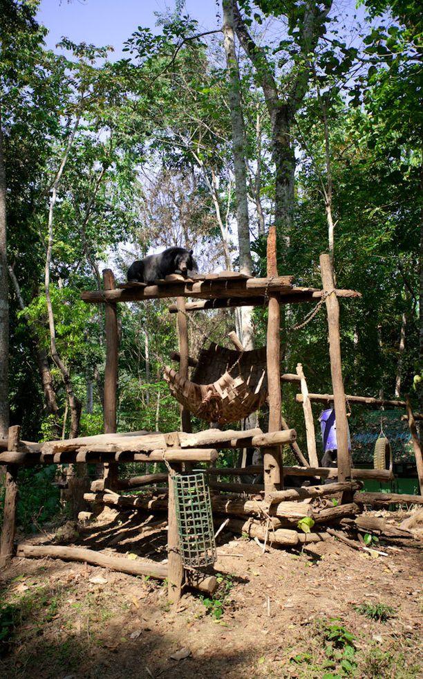 Aasiassa pelastetaan karhuja salametsästykseltä ja joutumiselta tarhoihin, joissa niiltä lypsetään sappinestettä.