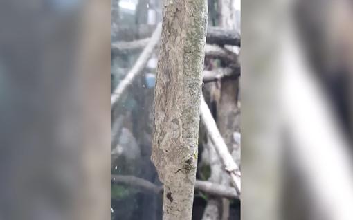 Hämmästyttävä naamioväri! Löydätkö tästä kuvasta liskoa?