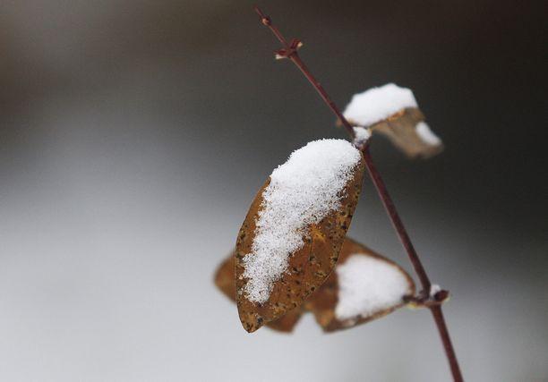 Ensi viikolla pohjoisessa voi tulla jo lunta.