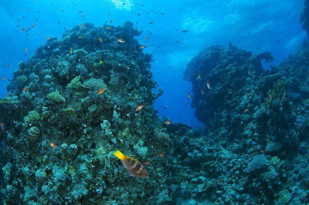 Koralliriutat ovat rikkaimpia merenalaisia ekosysteemejä, joista äärimmäisen harvat ovat ihmisen aiheuttamien haittojen ulottumattomissa.