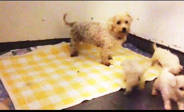 Kennelin koiria ei ollut ulkoilutettu, eikä niiden ravinnosta tai juomasta ollut huolehdittu.