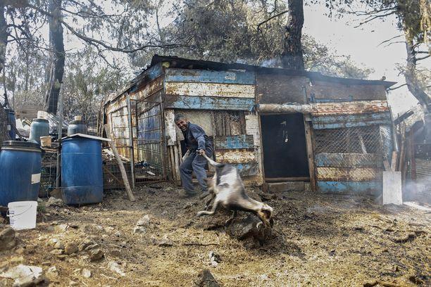 Maanviljelijä vei vuohtaan pois farmilta Makrimallin kylässä.