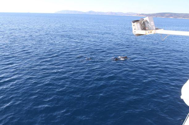Merikarhu osallistuu Euroopan unionin ulkorajojen valvontaoperaatioon Välimerellä.