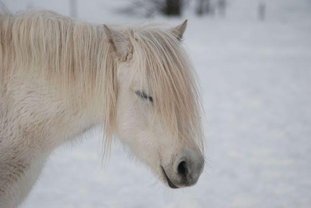Isokokoinen hevonen saatiin uurastuksen jälkeen ylös suo-ojasta. Kuvan hevonen ei liity tapaukseen.