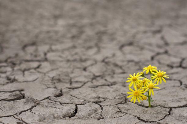 Kun maailma tai sen tärkeä osa tuntuu järkkyvän, kysytään epävarmuuden sietämistä.