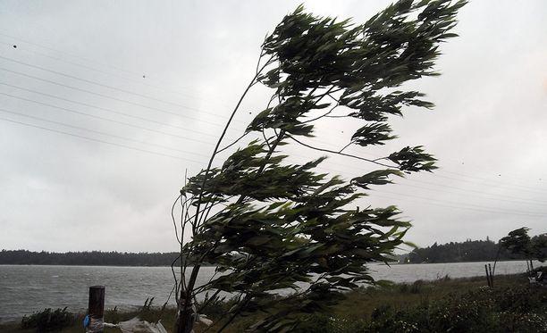 Puuskaiset tuulet ovat aiheuttaneet ongelmia etenkin Savossa. Kuvituskuva.