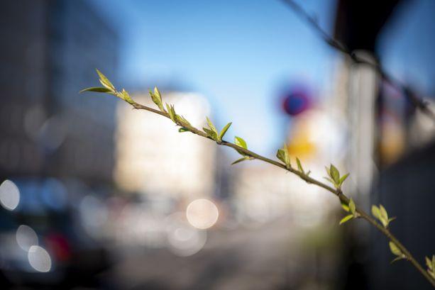 Kevät on tuloillaan. Kuva otettu Helsingissä 19.3.2020.
