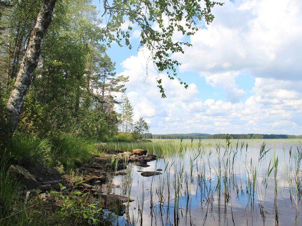 Lähes puolet Suomen luontotyypeistä on uhanalaisia koko maassa.