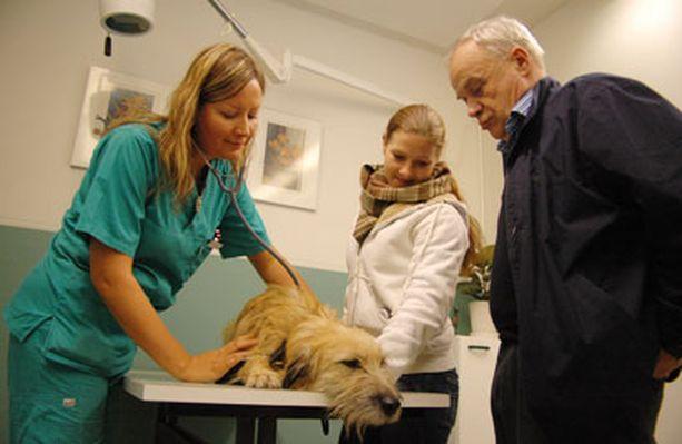 Lyytiä tutkittiin eläinlääkäriasema Käpälämäessä keskiviikkona iltapäivällä.
