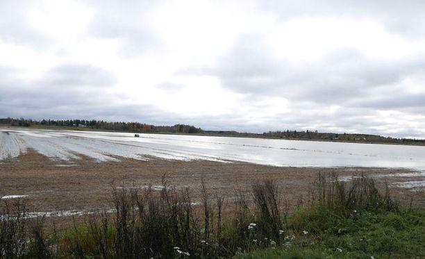 Vesi pelloilla oli tuttu näky menneellä satokaudella.