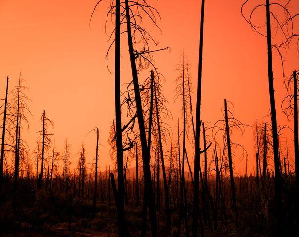 Ilmastonmuutos herättää ihmisissä ekoteologi Panu Pihkalan mukaan syviä eksistentiaalisia kysymyksiä.