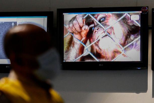 Apinarokosta kertova informaatiotaulu Indonesiassa vuonna 2019, jolloin maassa havaittiin ensimmäinen apinarokkotapaus.