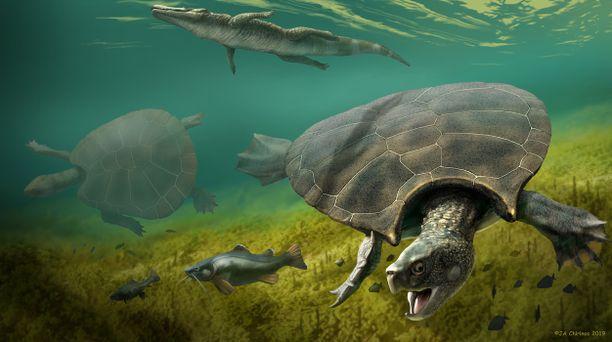 """Jättiläiskilpikonnalla oli panssarinsa etuosassa kaksi terävää """"peitseä"""", joilla se puolusti itseään. Painoa eläimellä oli noin 1 100 kiloa."""