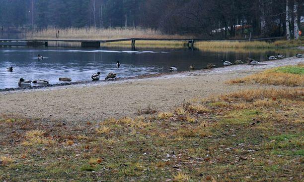 Uimarannoilla ruuhkaa marraskuussa? Mikkelin Pitkäjärven uimarannalla ei uimareita harmaa sää haitannut.