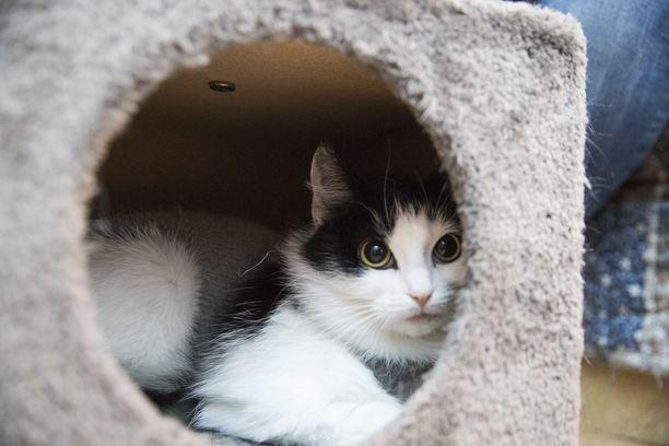 Kissojen löytökodit täyttyvät kesäisin.