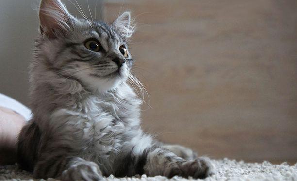 Kissanpentu sai rakastavan kodin.
