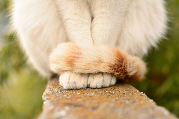 Jos häntä  on kiertynyt hyvin tiukasti ympärille, kissa voi olla hermostunut.
