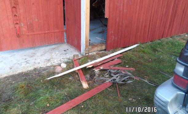 Laudasta ja teräsverkosta rakennettu seinä ei ollut este, vaan hidaste nälkäiselle uroskarhulle.