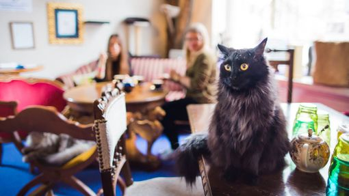 Kissakahvila Purnauskiksessa voi tutustua pörröisiin kavereihin.
