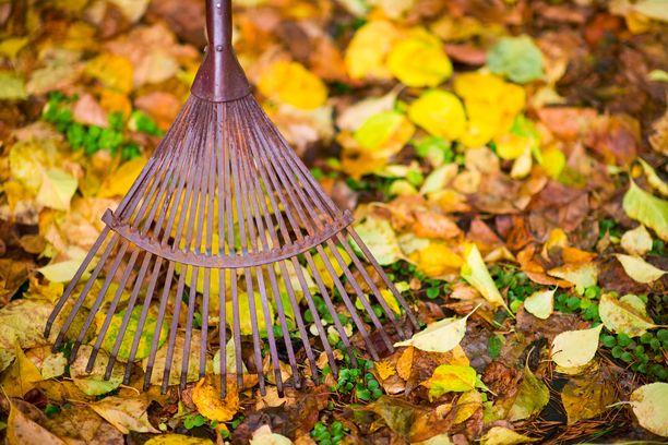 Syksyllä pihalla riittää monenlaista puuhaa. Kannattaa ennakoida, ettei lumihome pääse iskemään.