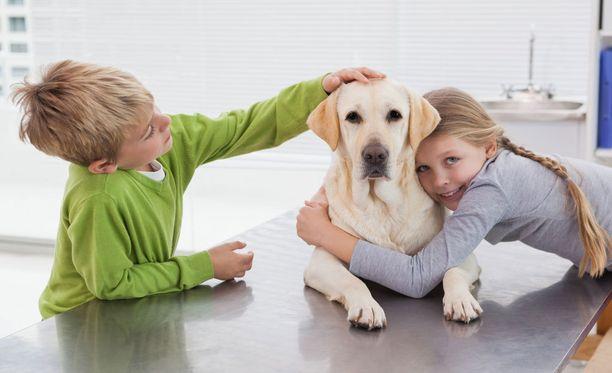 Koira voi kokea ylhäältä tulevan käden ja tiukan halauksen uhkaavana. Älä siis tee näin ainakaan vieraalle koiralle.