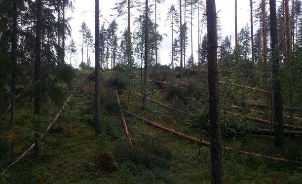 Trombi kaatoi useita puita Saarijärvellä.