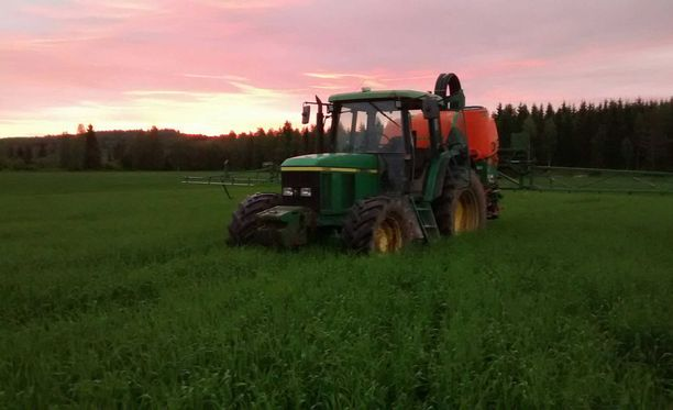 Ohra on kestänyt Harri Väänäsen pelloilla kuivuutta paremmin kuin kaura. Kuvassa ohrapelto.