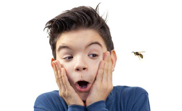Useat samanaikaiset ampiaisenpistot voivat olla olla lapselle vaarallisia. Kuvituskuva.