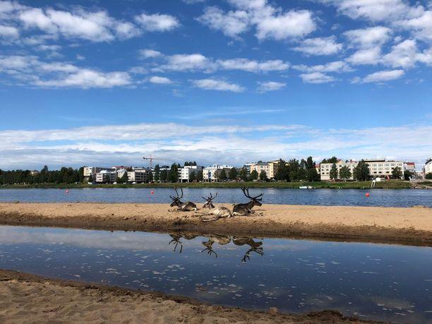 Porot makoilivat muina miehinä Ounaskosken uimarannalla maanantaiaamuna.