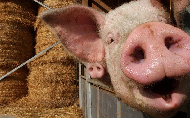 Rangaistukset eläinten kaltoin kohtelusta kovenevat.
