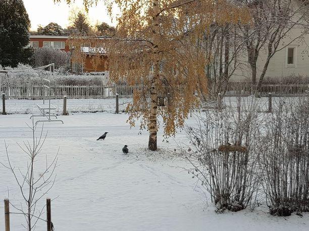 Tältä näytti Oulussa 1. marraskuuta.